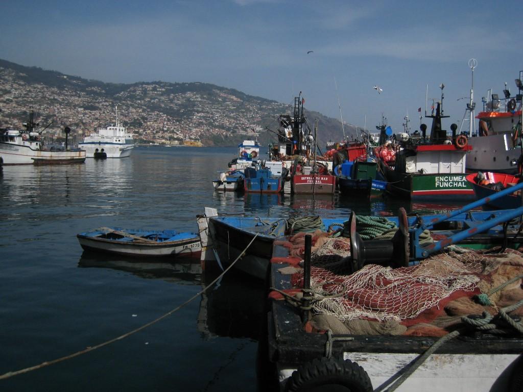 Funchal-Port-peche-1024x768